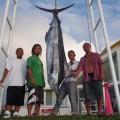 沖縄のトローリンングで釣れたカジキ、船長はクレーンズ沖縄、鶴巻守