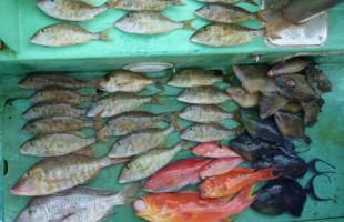 エサ釣りで釣れたたくさんの魚