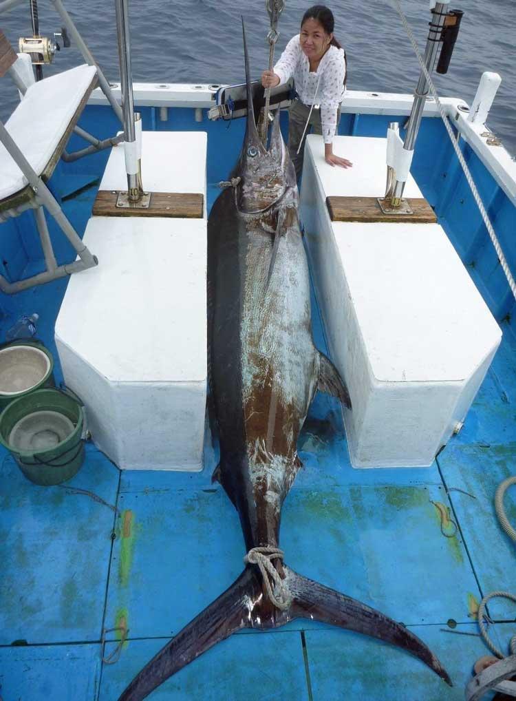 船の後部デッキに横にしたカジキ