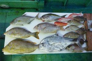 タイラバ1日の釣果