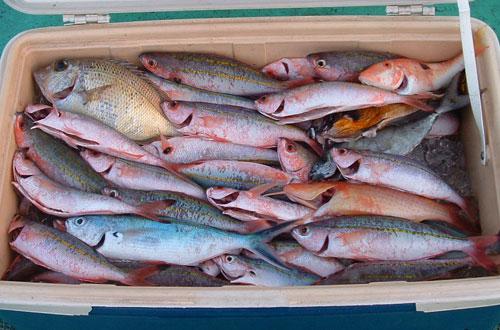 グルクン釣り一人分の全釣果