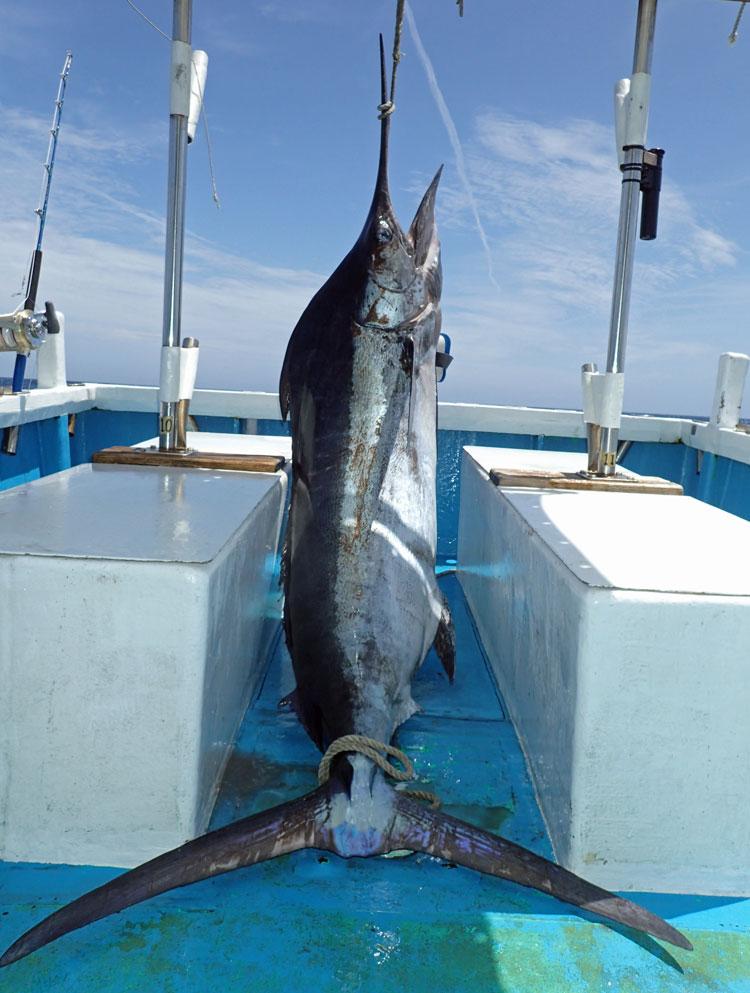 クレーンズ沖縄、鶴丸の鶴巻船長がトローリングで一人で釣ったクロカジキ110kg