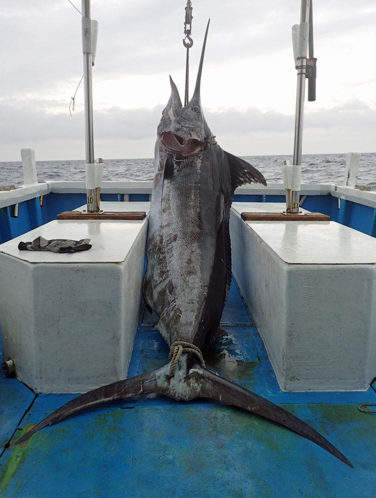 トローリングでクレーンズ鶴丸の鶴巻船長が釣り上げた150kgのカジキ