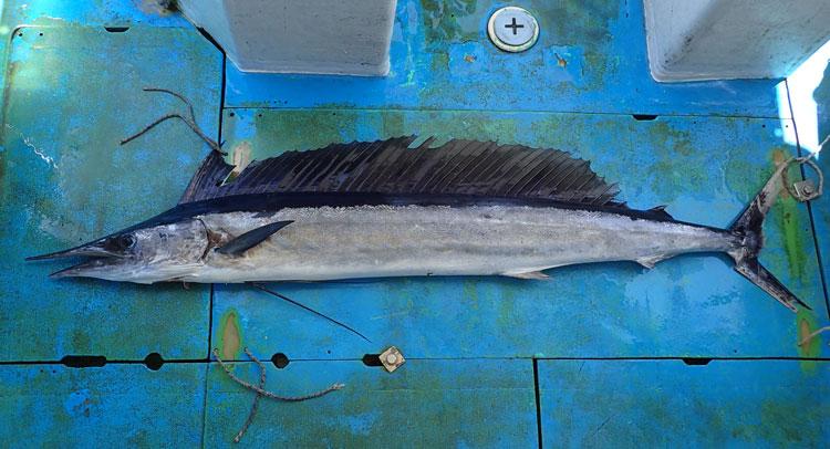 クレーンズ沖縄のトローリングでフウライカジキ