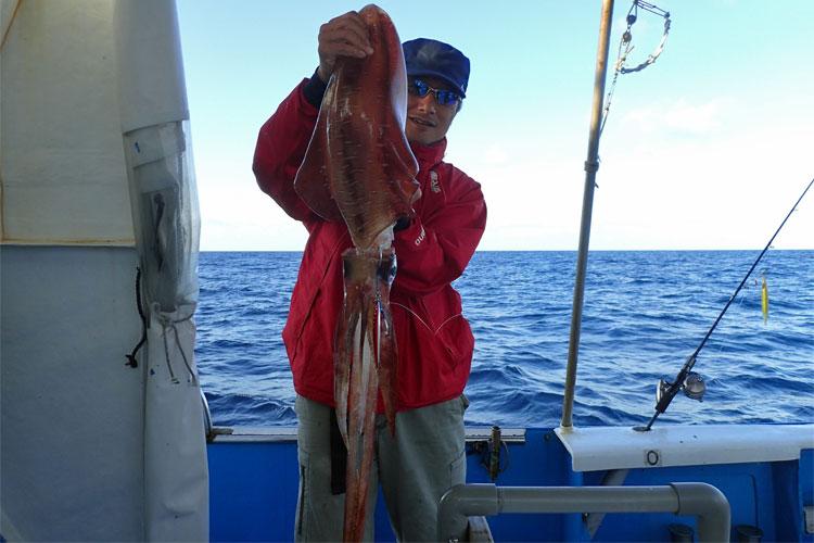 ジギングで釣れたアオリイカ3kg