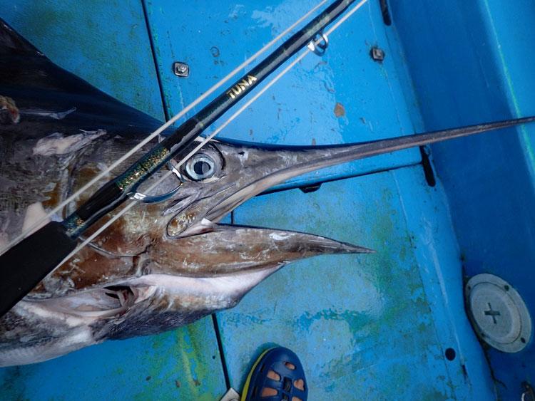 カジキを釣り上げたロッド