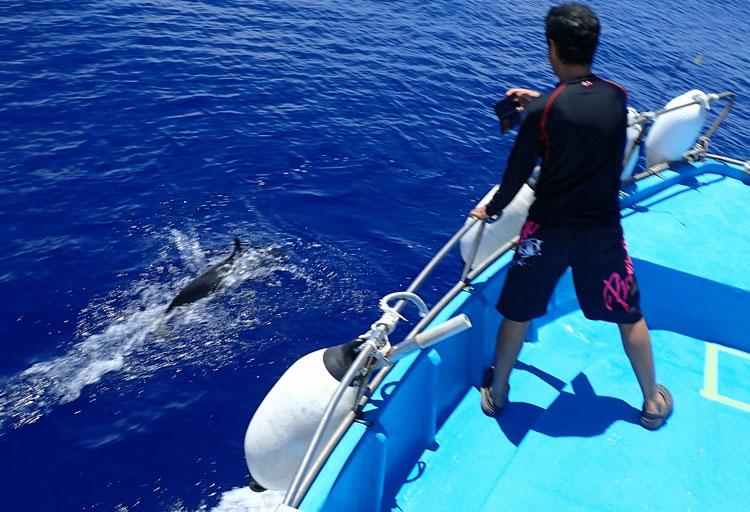 イルカを撮影している父
