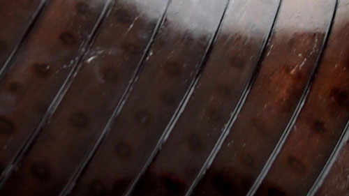 バショウカジキのセイルの模様アップ