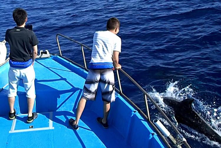 船に近寄ってきたイルカ