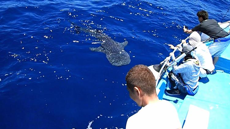 ジンベイザメを見ている四人の男性