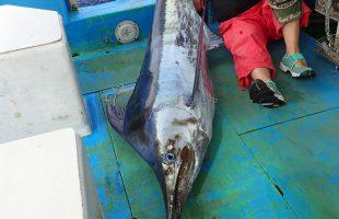 ブルーマーリンMarlin fishing iin okinawa