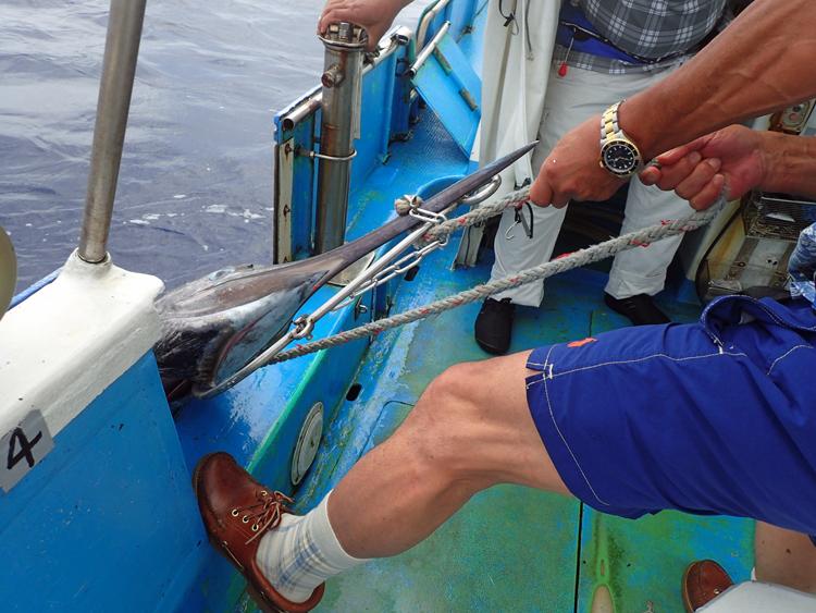 自ら釣ったカジキを引き上げる77才の男性