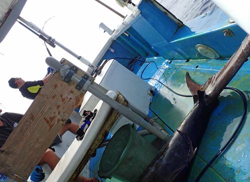 釣り上げた1匹目のカジキの奥で2匹目とファイト中のアングラー