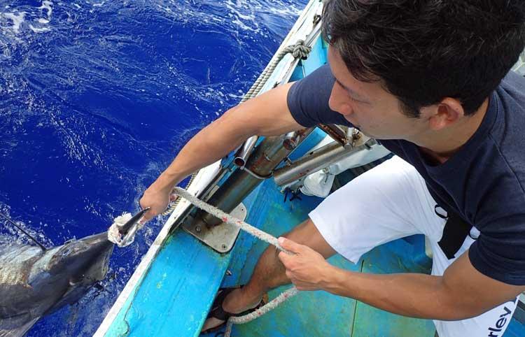 自ら釣ったカジキを船に引き上げる男性