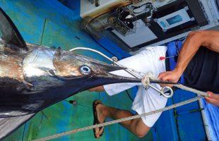 自ら釣ったカジキを釣り上げる22歳の若い男性