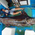 クレーンズ沖縄、鶴丸のトローリングで230kgのカジキを釣り上げた香港から来た若い男性