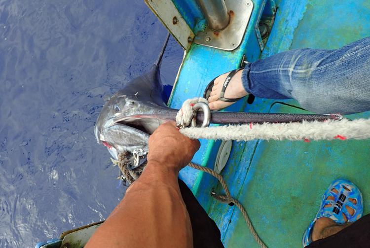 仕留めたカジキを船に引き上げる鶴丸船長とアングラーの70才の男性