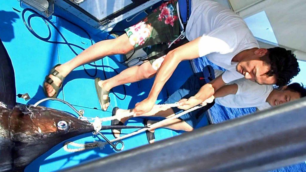 カジキを船に引き上げる大分県と熊本県の男性