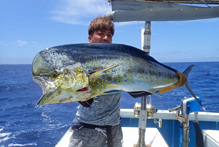 トローリングで釣れた雄のシイラ