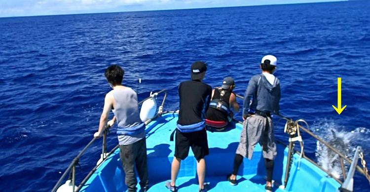 沖縄のトローリング最中にイルカに遭遇