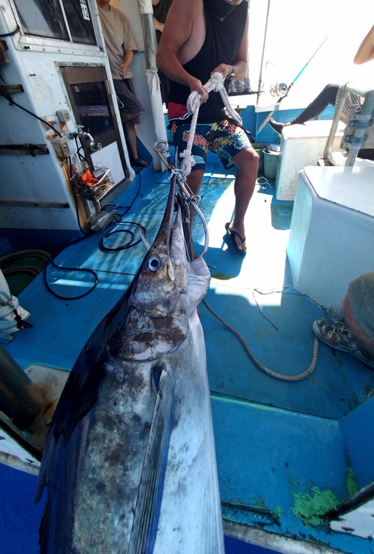 カジキを船に引き上げる千葉県から沖縄にカジキを釣りに来た男性