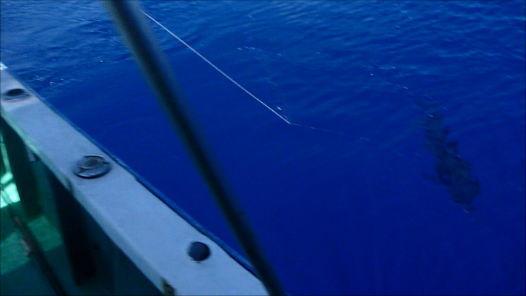 カジキ魚影