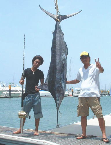 クロカジキ66kg
