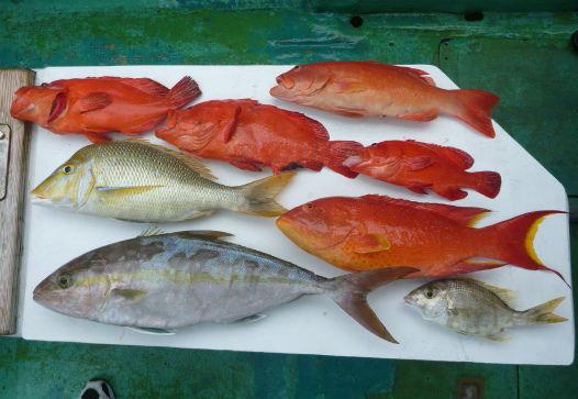 ジギング&タイラバで釣った魚