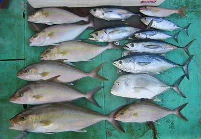 ジギングの釣果/2007年12月15日